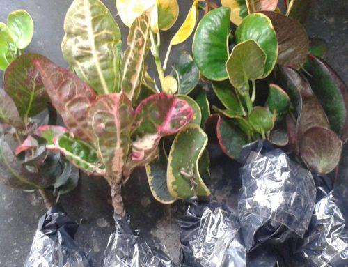 Penanganan paket tanaman online yang baru sampai