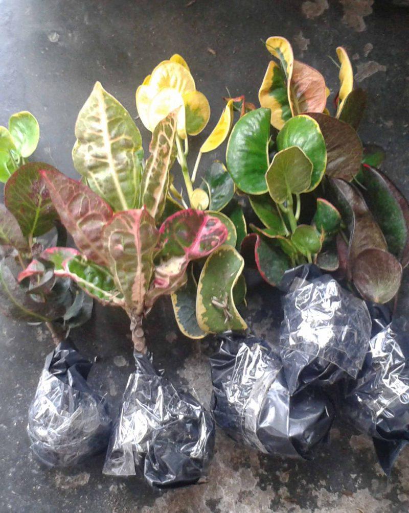 pertanyaan tentang bibit tanaman